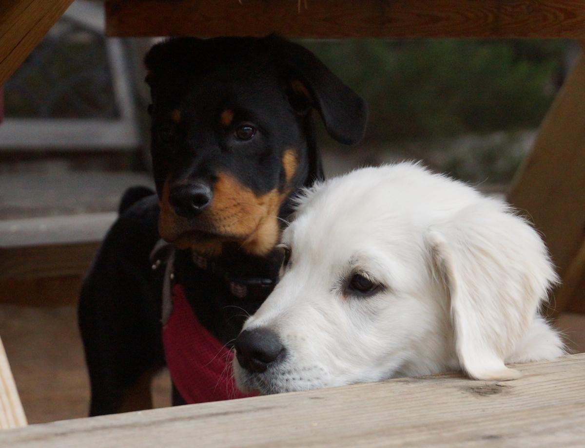 dog body language eyes